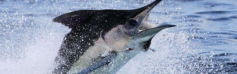 fishing-charters-maya-riviera
