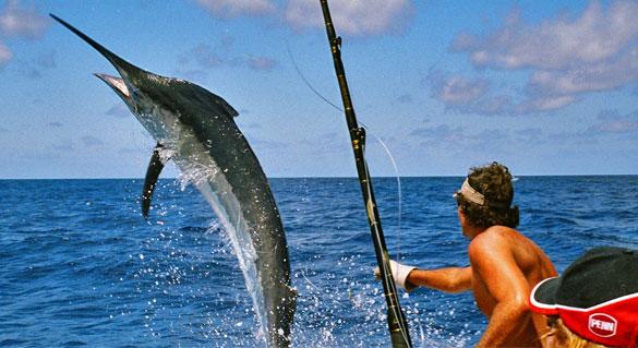fishing charters orange beach