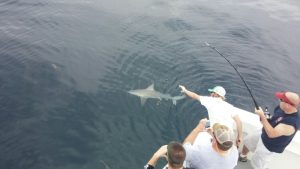 shark fishing trips Orange Beach