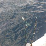 best shark fishing trips in Orange Beach, AL
