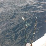 best shark fishing trips in Orange Beach, AL