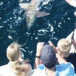 Shark Fishing Trips in Orange Beach