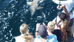 Shark Fishing Trips in Orange Beach
